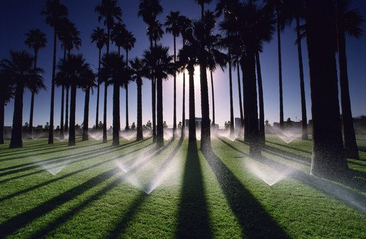 sprinkler-repair-guy-franchise-palm-trees